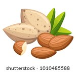 shelled and without shell... | Shutterstock .eps vector #1010485588