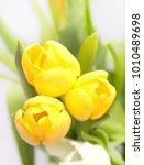 bouquet of three yellow tulips...