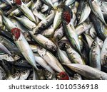 atlantic horse mackerel ...   Shutterstock . vector #1010536918