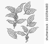 hand drawn coffee leaf vector   ... | Shutterstock .eps vector #1010564683