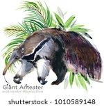 anteater watercolor illustration | Shutterstock . vector #1010589148