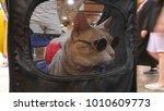 Cat Wearing Glasses In Pet...