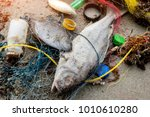 death fish on the beach with... | Shutterstock . vector #1010610280