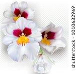 orchid flowers miltoniopsis...   Shutterstock .eps vector #1010632969