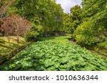 tropical garden in the azores | Shutterstock . vector #1010636344