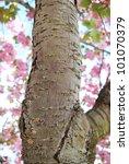 Sakura Bark Texture