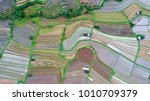 an aerial image of a rice... | Shutterstock . vector #1010709379