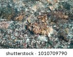 stones in water  background for ... | Shutterstock . vector #1010709790