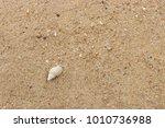 fossil shell on the sand beach  ...   Shutterstock . vector #1010736988