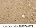 fossil shell on the sand beach  ... | Shutterstock . vector #1010746174