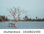 the bird is on a leafless tree...   Shutterstock . vector #1010821450