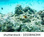 variety of colourful  tropical... | Shutterstock . vector #1010846344