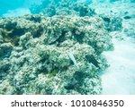 variety of wrasse  surgeonfish... | Shutterstock . vector #1010846350