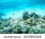 damselfish  clown fish and... | Shutterstock . vector #1010846368