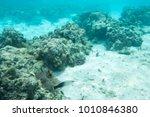 unique tropical fish swimming... | Shutterstock . vector #1010846380
