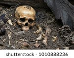 skull and bones digged from pit ... | Shutterstock . vector #1010888236