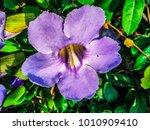 the violet flower garden   Shutterstock . vector #1010909410
