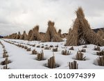 rice straw and snow scene in... | Shutterstock . vector #1010974399