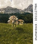 Small photo of Cow in front of a beautiful alpine landscape