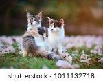 Portrait Of Happy 3 Color Cat...