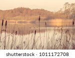 silhouettes of tall rushes by... | Shutterstock . vector #1011172708