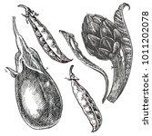 hand drawn sketch eggplant ... | Shutterstock .eps vector #1011202078