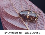 macro shot of a cockroach on a... | Shutterstock . vector #101120458