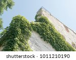 building with vines growing on...   Shutterstock . vector #1011210190