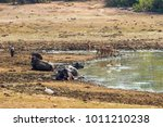muddy waterhole with a variety... | Shutterstock . vector #1011210238