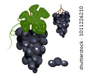 grapes stylized isolated... | Shutterstock .eps vector #1011226210