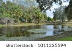 palm trees and a pond in port... | Shutterstock . vector #1011235594