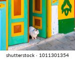 Cat On The Doorstep At Guatape...