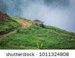 live and dead tree in the grass.... | Shutterstock . vector #1011324808