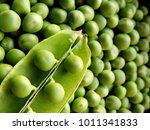 vibrant green image of top view ... | Shutterstock . vector #1011341833
