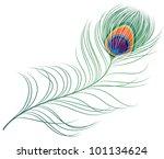 peacock plume | Shutterstock .eps vector #101134624
