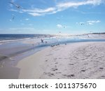 sea gulls at gulf shores ... | Shutterstock . vector #1011375670
