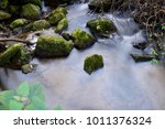 stream in the forest .    | Shutterstock . vector #1011376324