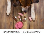 dog eating banned food.... | Shutterstock . vector #1011388999