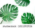 real monstera leaves set on... | Shutterstock . vector #1011392926