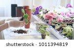 florist transplant small... | Shutterstock . vector #1011394819