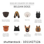 dogs by country of origin.... | Shutterstock .eps vector #1011427126