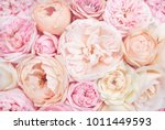 Stock photo summer blossoming delicate roses on blooming flowers festive background pastel and soft bouquet 1011449593