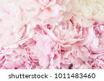 beautiful pink peony flower... | Shutterstock . vector #1011483460