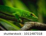 Day Gecko Phelsuma Green On A...