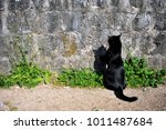 Black Cat Sitting At The Wall