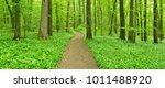 footpath winding through...   Shutterstock . vector #1011488920