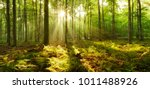 Forest Of Beech Trees...