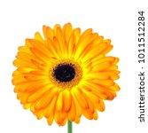 multicolored orange and yellow... | Shutterstock . vector #1011512284