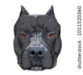 pit bull head | Shutterstock .eps vector #1011520360