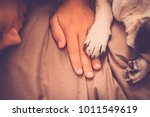 nice pug dog protect his owner...   Shutterstock . vector #1011549619